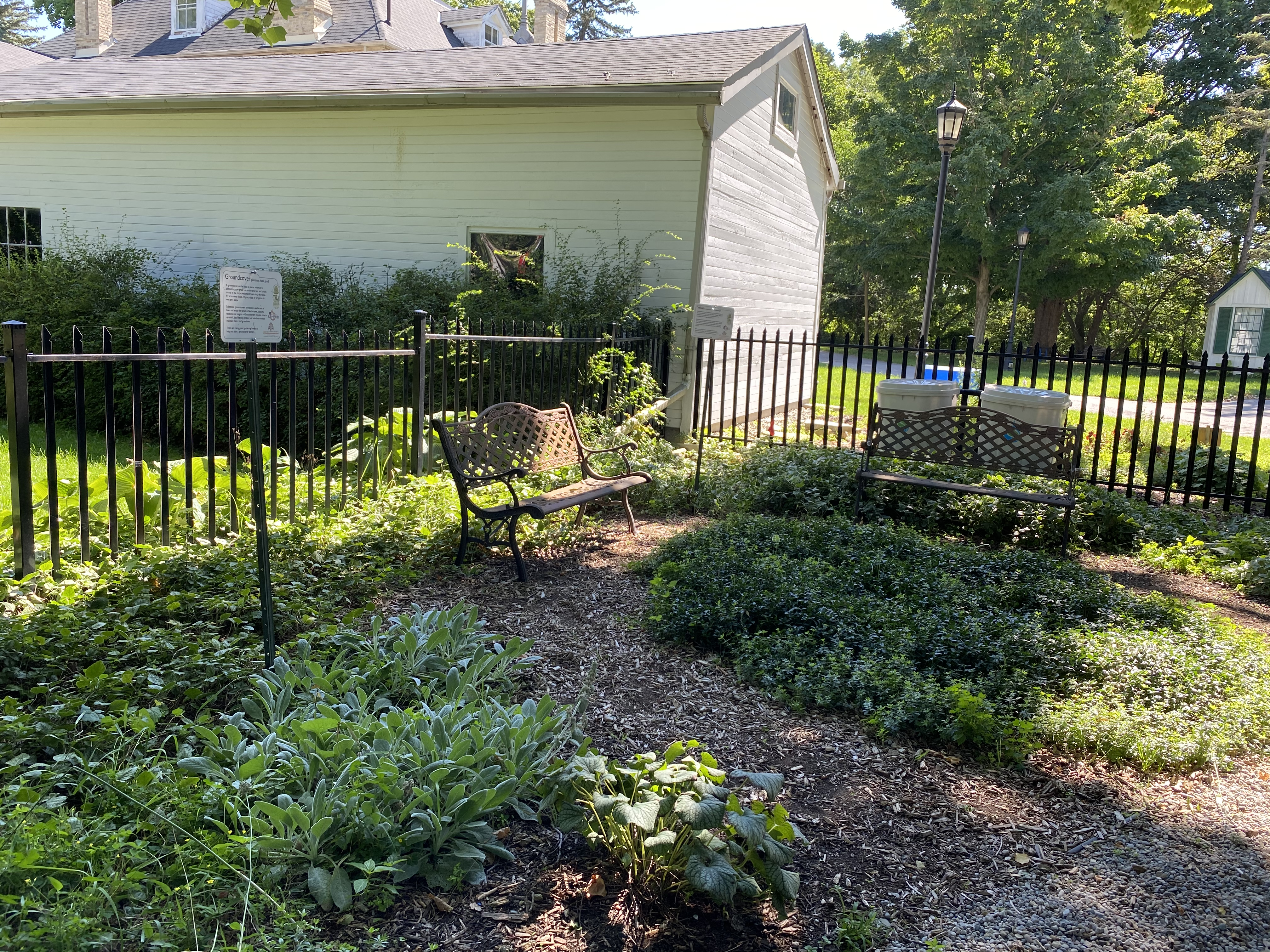 TREA-compost-site-groundcovers-Sept-2020